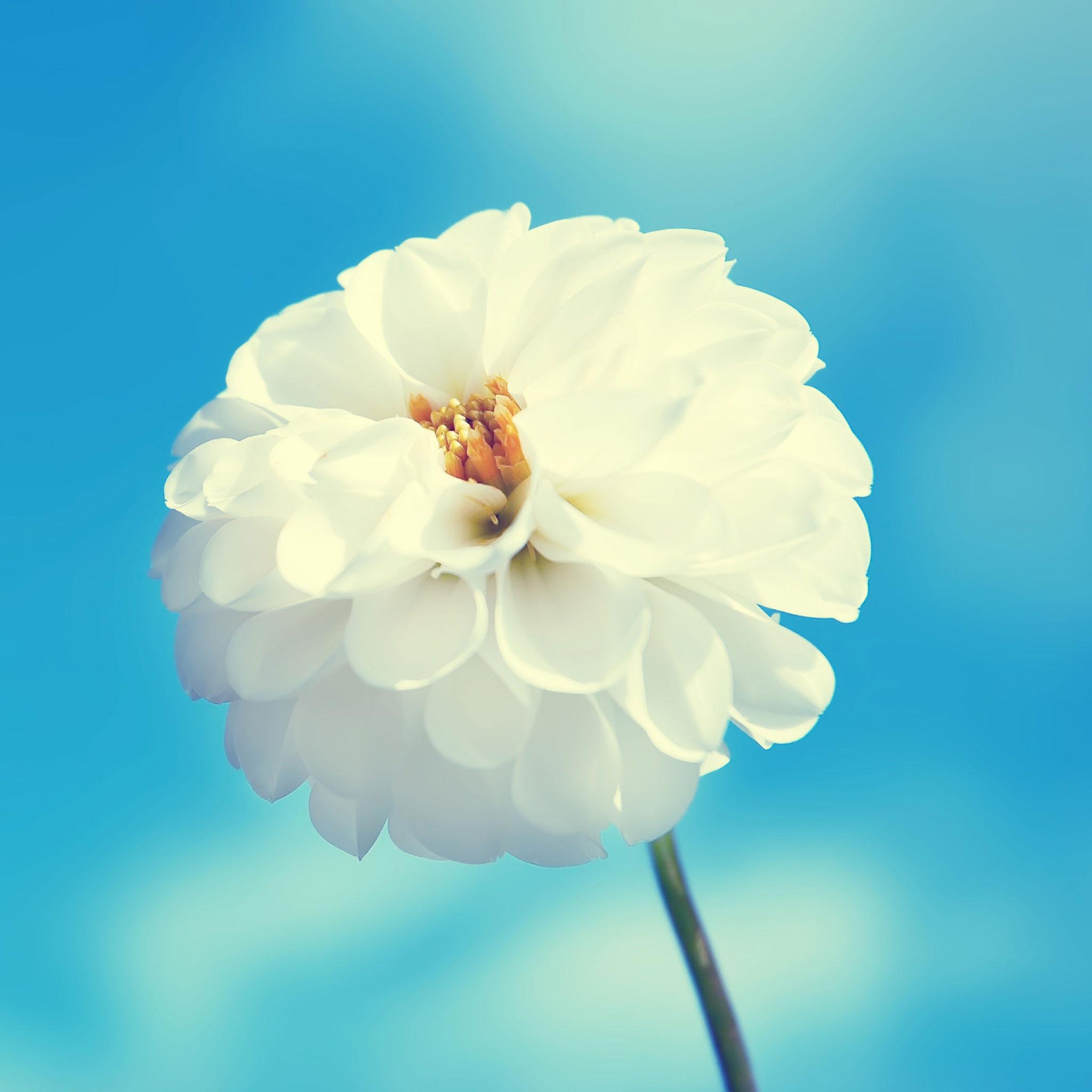 Flor iPad
