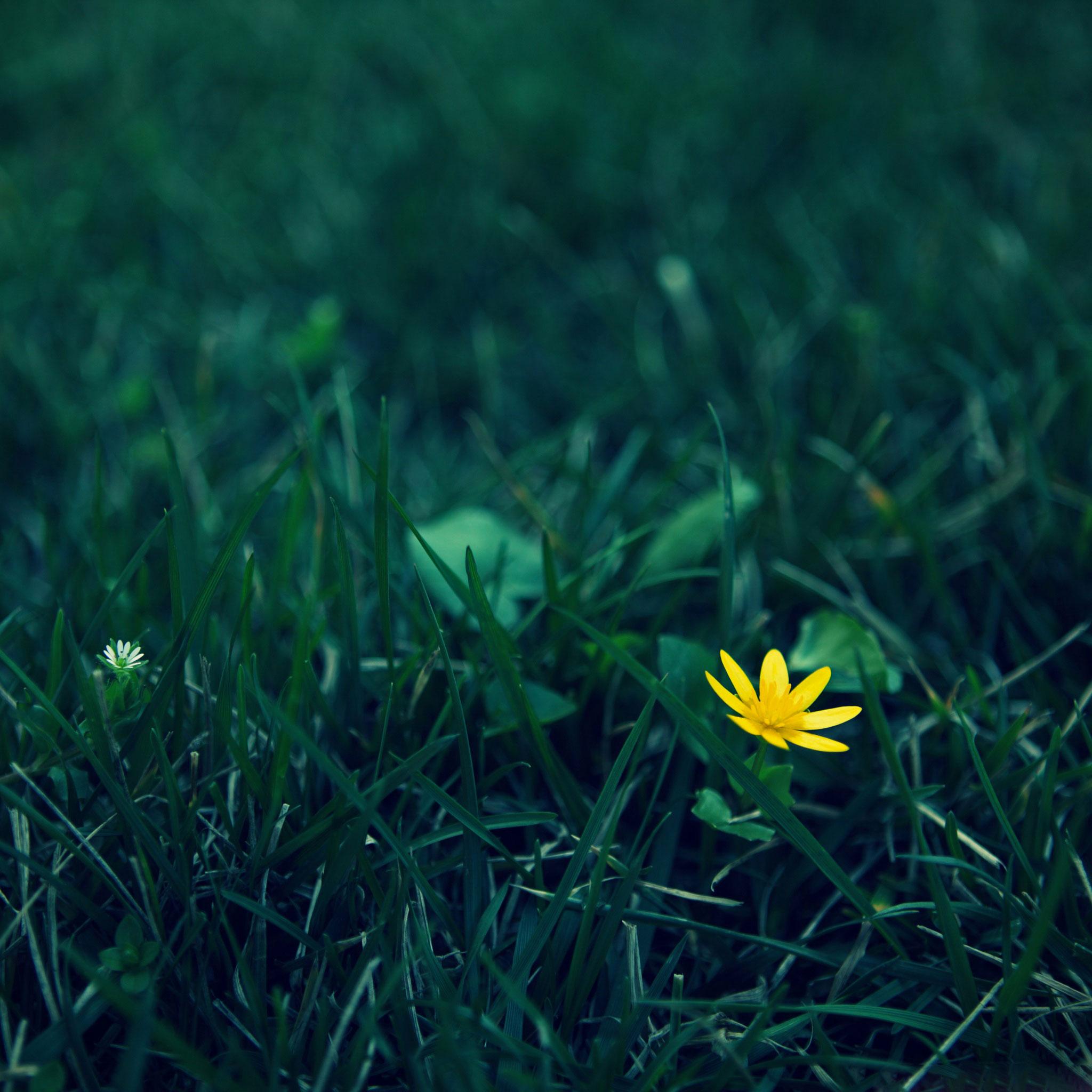 Flor no mato